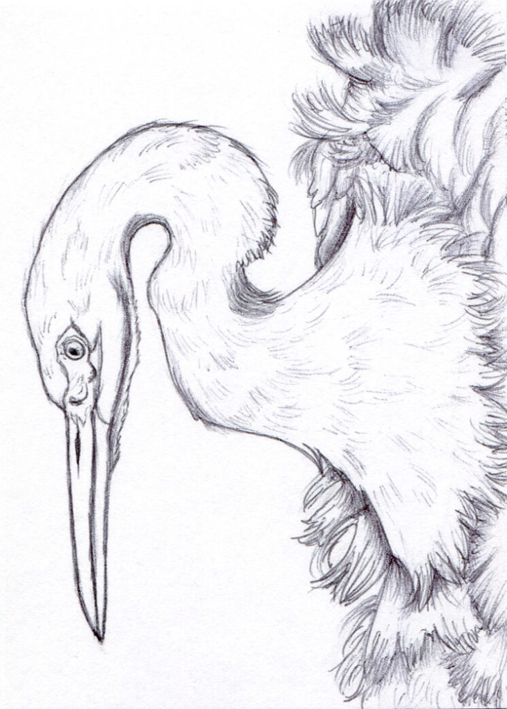 a ballpoint pen drawing of a snot egret bird